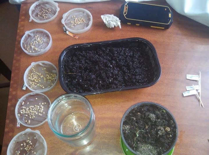 Подготавливаем семена к посеву