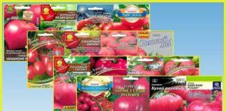 томаты розовые описание