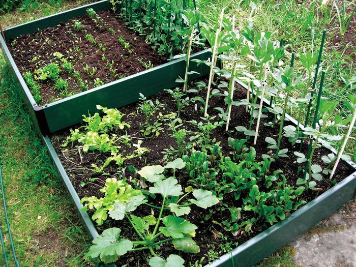 схемы смешанных посадки овощей на грядке