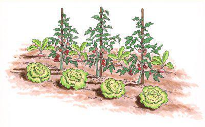 схемы смешанных и уплотненных посадок овощей