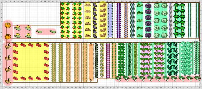 таблицы смешанные посадки овощей на грядке