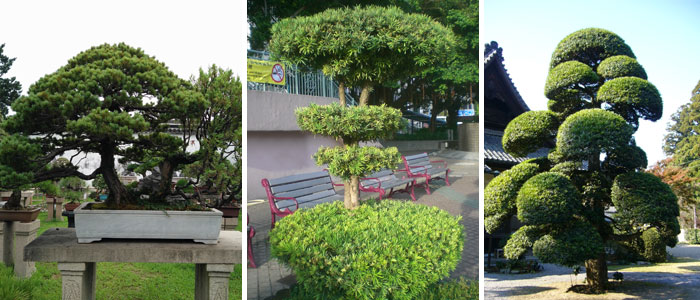 topiar-bonsai.jpg