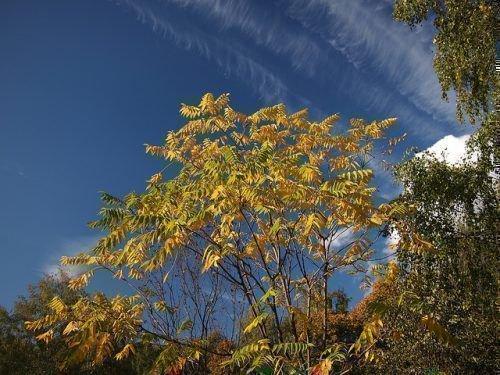 Как посадить грецкий орех саженцем, посадка весной и осенью, как правильно