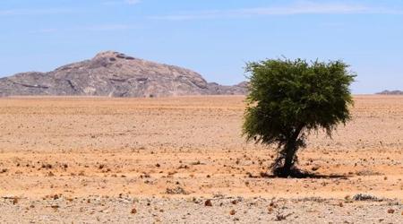 Pochvy-pustyni.jpg