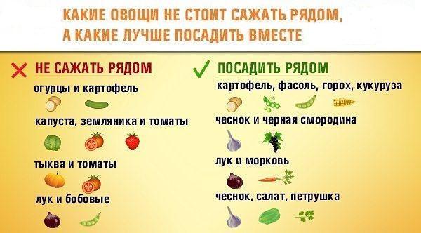 sovmestimost-ovoshey-ryadom.jpg