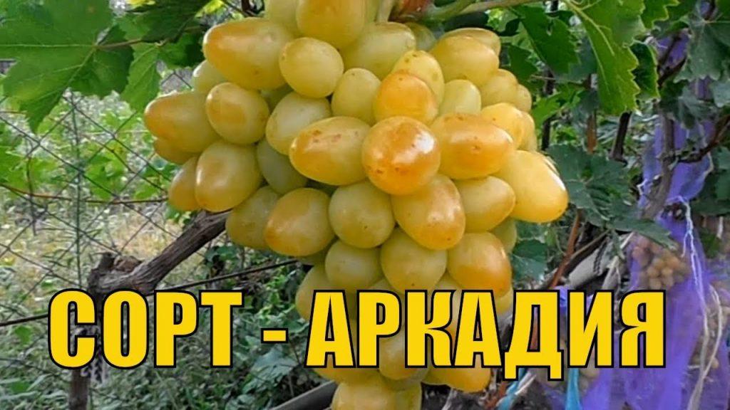 arkadija-1024x576.jpg