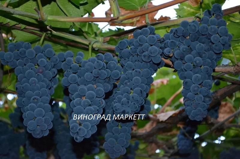 vinograd-markett.jpg
