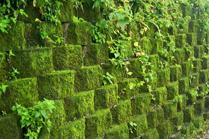 1280px-Taiwan_2009_JinGuaShi_Historic_Gold_Mine_Moss_Covered_Retaining_Wall_FRD_89401.jpg