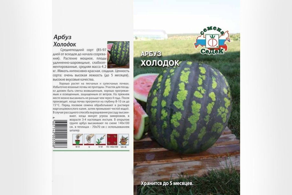 arbuz-holodok-1024x683.jpg