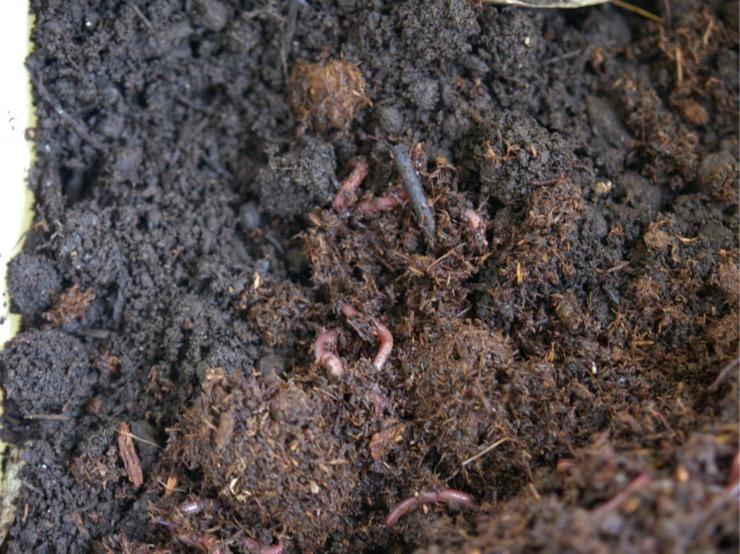 kompost-1.jpg
