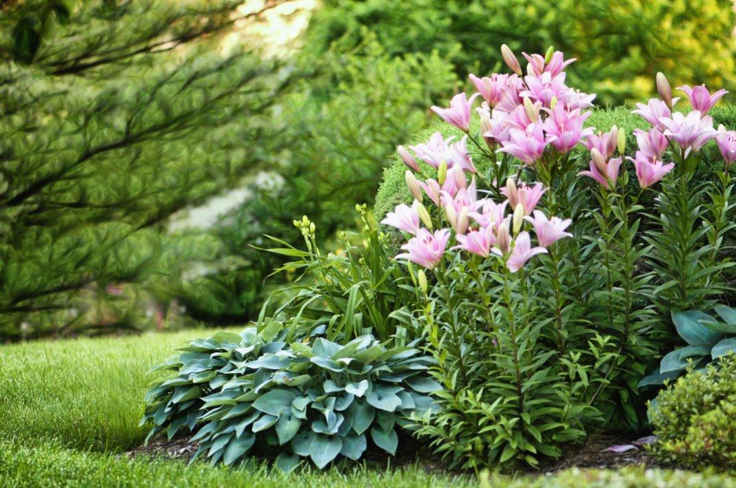 Garden-01-640x425.jpg