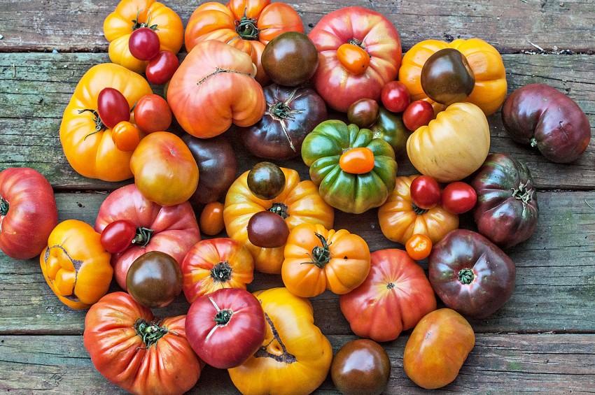 tomat-byiche-serdtse-81.jpg