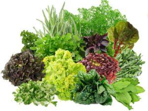 3-greenery-300x225.jpg