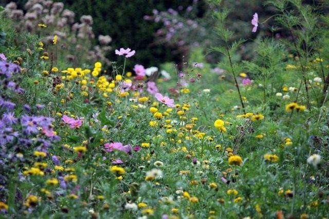 Flower-meadow-640x426.jpg