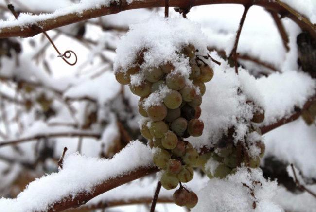 kist-pod-snegom-650x436.jpg