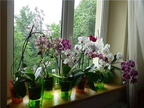 Orhideya-na-podokonnike.jpg
