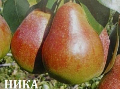 nika-2.jpg