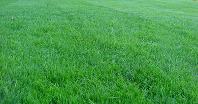 Декоративный газон – методы посадки