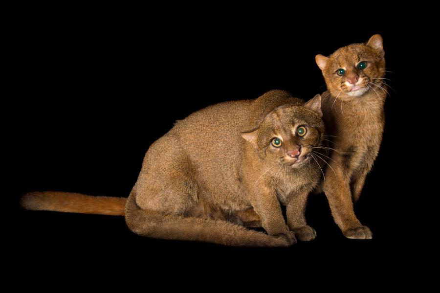 Cats-10-1.jpg