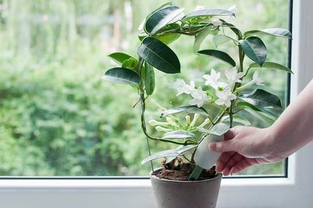 A-device-for-moistening-vases.jpg
