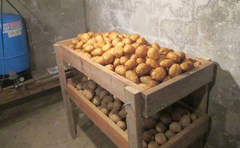 Kak-pravilno-hranit-kartofel-v-pogrebe-konstruiruem-derevyannye-yashhiki.jpg