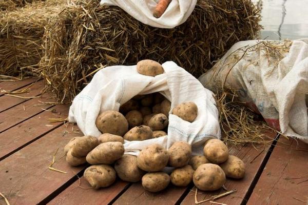 hranenie-kartofelya-v-kvartire-7.jpg