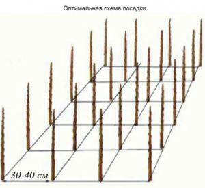 kolonovidnye-yabloni-posadka-300x275.jpg