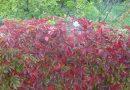 """Опоры для вьющихся растений: что можно соорудить для """"лазящих"""" обитателей сада?"""