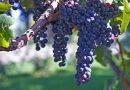 Российское садоводство и виноградарство