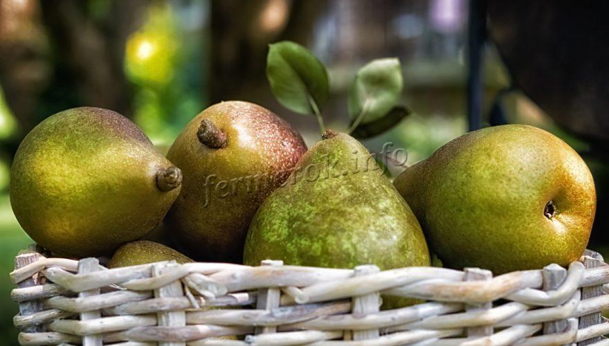 pear-2-880x500.jpg