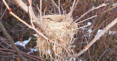 Гнездо из веток своими руками: советы и инструкции по изготовлению декоративных гнезд (140 фото)