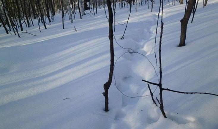 петля-на-зайца-зимой.jpg