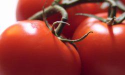 Tomat-CHudo-ryinka-250x150.jpg