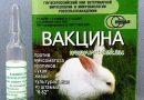 Миксоматоз у кроликов – симптомы и профилактика